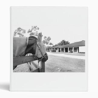 caballo que mira fijamente bw c.jpg del granero