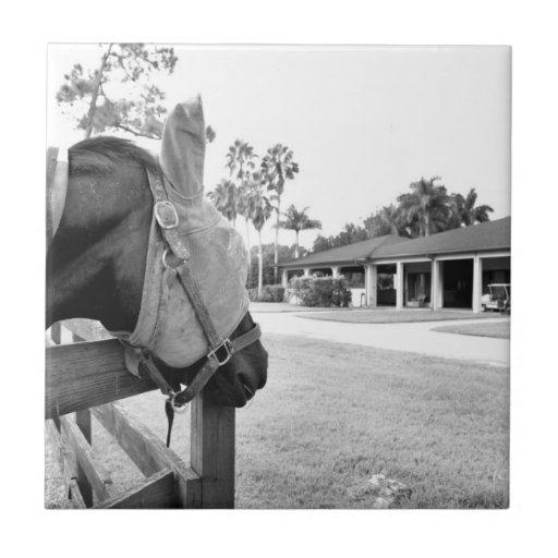 caballo que mira fijamente bw c.jpg del granero azulejo cuadrado pequeño