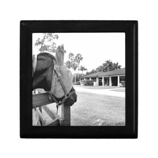caballo que mira fijamente bw c.jpg del granero cajas de regalo