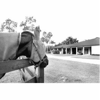 caballo que mira fijamente el bw del granero esculturas fotográficas