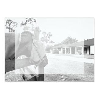 """caballo que mira fijamente el bw del granero invitación 5"""" x 7"""""""