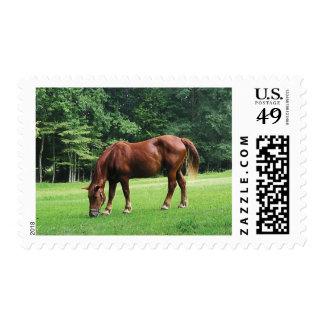 Caballo que pasta en pasto timbres postales