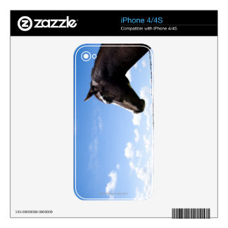Caballo que se coloca en la cerca en pasto calcomanía para el iPhone 4
