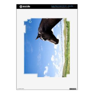 Caballo que se coloca en la cerca en pasto iPad 3 skin