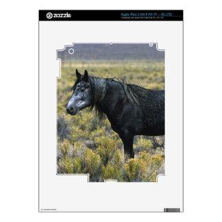 Caballo salvaje del mustango en el desierto iPad 3 skin