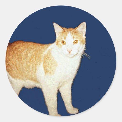 Caballo salvaje el gato etiquetas redondas