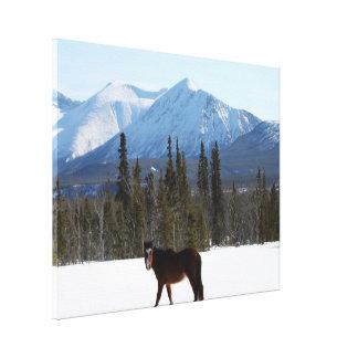 Caballo salvaje en la carretera de Alaska Lona Estirada Galerías