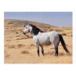 Caballo salvaje gris en la gama, Utah Postales