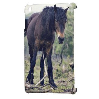 caballo salvaje negro del potro en la acción