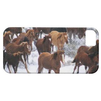 Caballo salvaje que corre en nieve funda para iPhone SE/5/5s