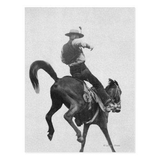 Caballo salvaje tímido del montar a caballo de Ned Postales