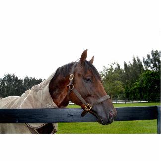 caballo sobre cambio del cielo de la vista lateral esculturas fotograficas