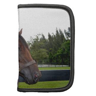caballo sobre cambio del cielo de la vista lateral organizadores