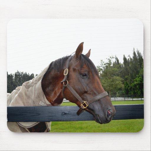caballo sobre cambio del cielo de la vista lateral tapete de raton