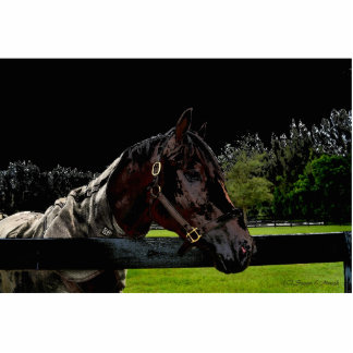 caballo sobre colores oscuros de la vista lateral esculturas fotograficas
