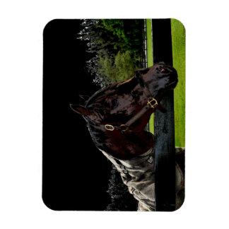 caballo sobre colores oscuros de la vista lateral imanes rectangulares