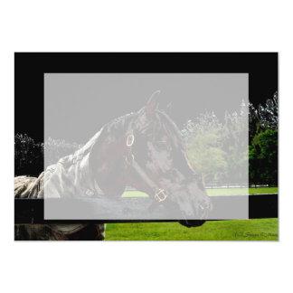 """caballo sobre colores oscuros de la vista lateral invitación 5"""" x 7"""""""