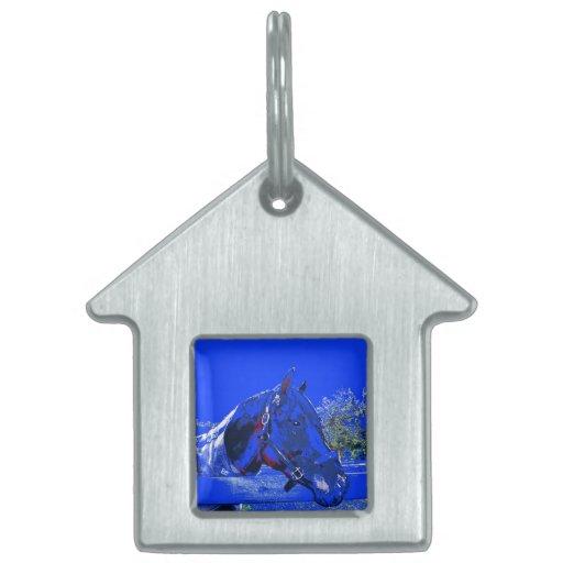 caballo sobre dibujo animado del azul de la vista  placa mascota