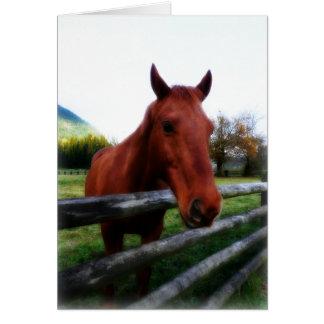 Caballo sobre el retrato fotográfico de los carril tarjeta de felicitación