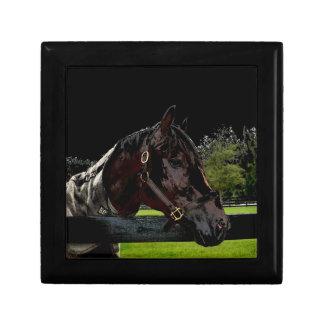 caballo sobre oscuridad de la vista lateral de la caja de recuerdo