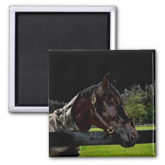caballo sobre oscuridad de la vista lateral de la  imán cuadrado