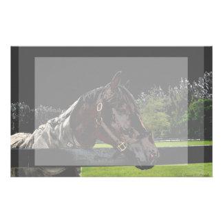 caballo sobre oscuridad de la vista lateral de la papeleria de diseño