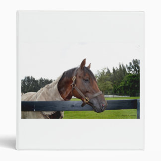 caballo sobre vista lateral de la cerca