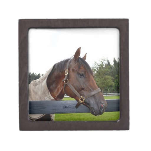 caballo sobre vista lateral de la cerca cajas de joyas de calidad