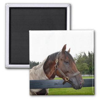 caballo sobre vista lateral de la cerca imán cuadrado