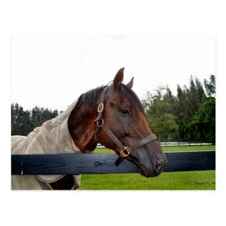 caballo sobre vista lateral de la cerca postales