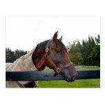 caballo sobre vista lateral de la cerca tarjeta postal