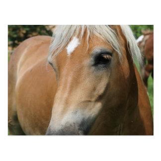 caballo tarjeta postal