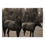 caballo tarjetas