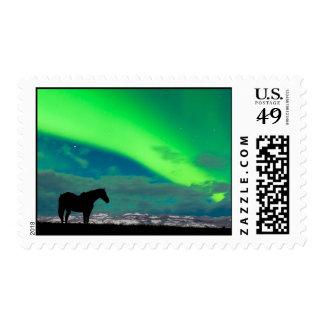 Caballo y aurora boreal, el Yukón Envio