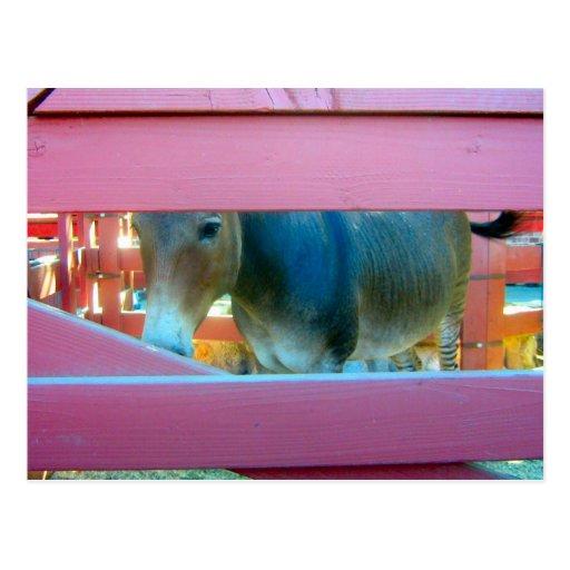 Caballo y cerca rosada - postal