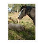 caballo y cerdos tarjeta postal