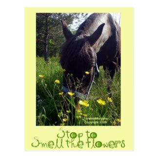 Caballo y flores tarjeta postal