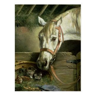 Caballo y gatitos, 1890 tarjeta postal