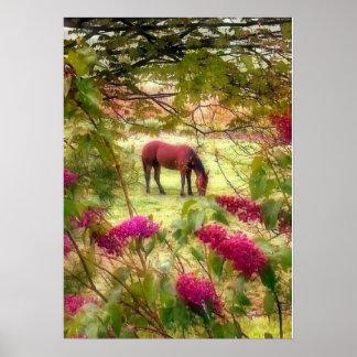 Caballo y lilas poster