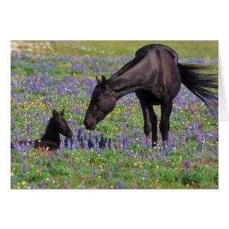 Caballo y potro en campo de los Wildflowers Tarjeta De Felicitación