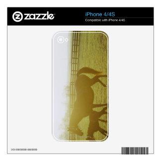 Caballo y potro que corren en pasto iPhone 4 calcomanías