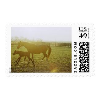 Caballo y potro que corren en pasto sello postal