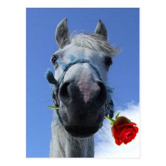 caballo y tema color de rosa del amor postal