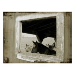 Caballos a través de una ventana del granero impresiones