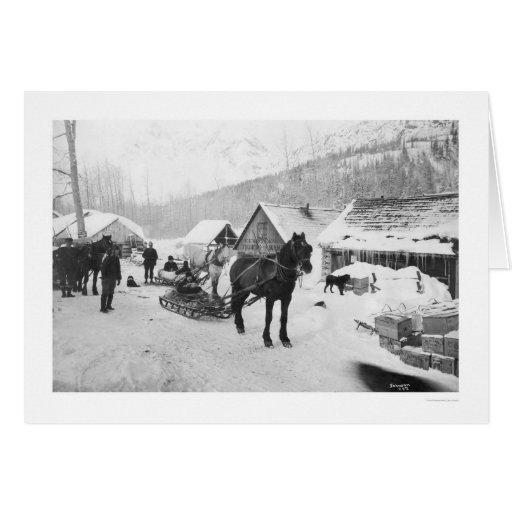 Caballos Alaska 1912 del rastro de Valdez Tarjeta