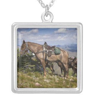 Caballos (caballus del ferus del Equus) en la Colgante Cuadrado