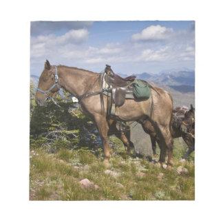 Caballos caballus del ferus del Equus en la desc Bloc