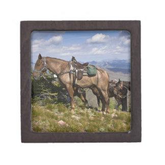 Caballos caballus del ferus del Equus en la desc Caja De Regalo De Calidad