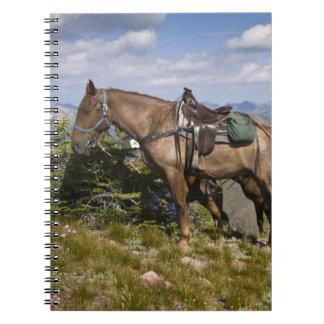 Caballos (caballus del ferus del Equus) en la desc Cuaderno