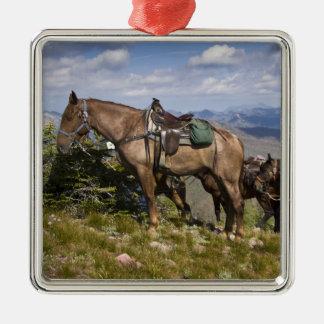 Caballos caballus del ferus del Equus en la desc Ornamentos Para Reyes Magos